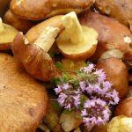 Pâté de champignons