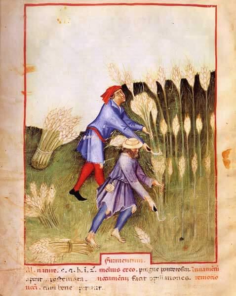 L'alimentation Médiévale 1