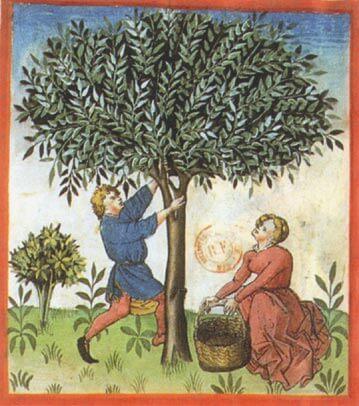 L'alimentation Médiévale 6